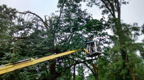 Baumpflege mit dem Steiger