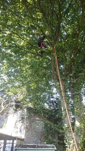 Baumpflege mittels Klettertechnik